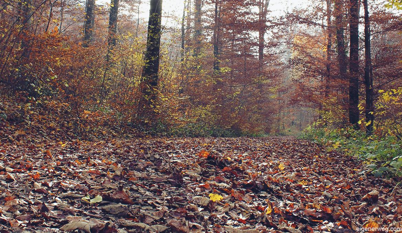 Die Herbst-Aktivitäten-Liste