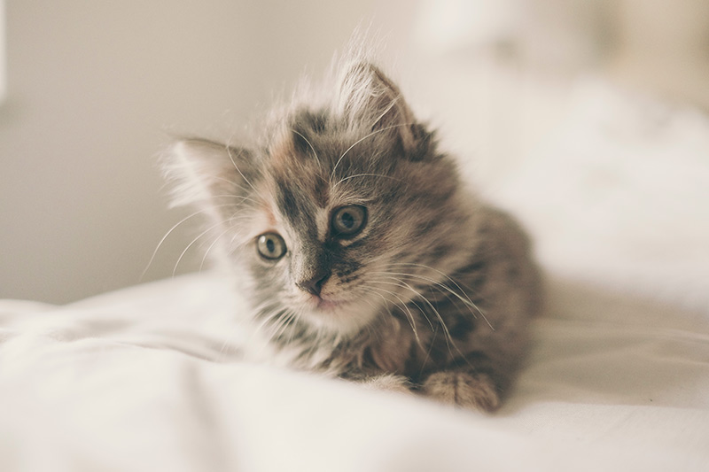 kitten-freddie-marriage-40645