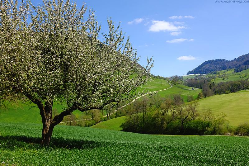 Frühlingswanderung bei Bärschwil
