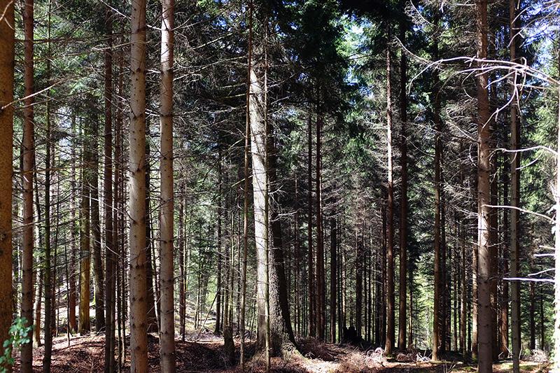 Wald im Baselbiet
