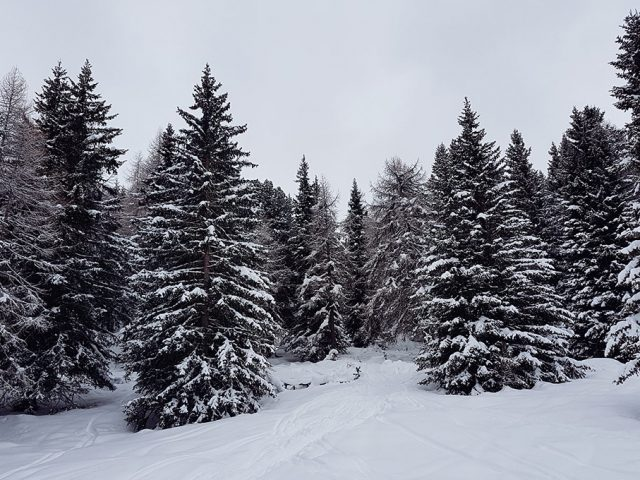 Wintersport: Schneeschuhwandern für Anfänger