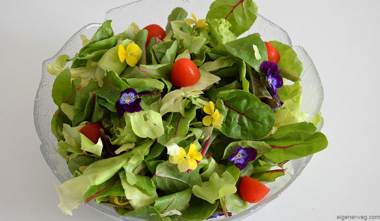 Salat grün Essen