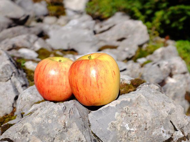 Äpfel in der Natur